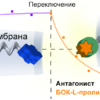 Первый в мире синтетический рецептор имитирует «общение» с окружающим миром